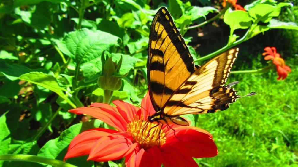 Name:  Butterfly.jpg Views: 93 Size:  98.5 KB
