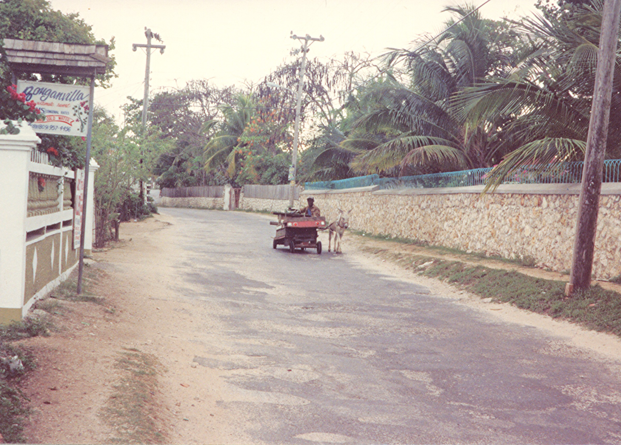 Name:  donkey cart  west end rd  am vegtables 1984.jpg Views: 503 Size:  1,006.1 KB