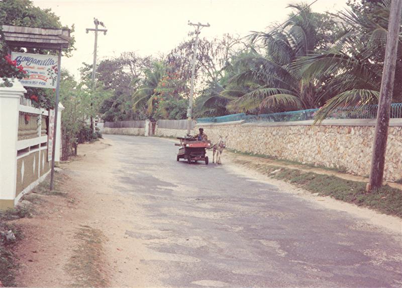 Name:  donkey cart  west end rd  am vegtables 1984 (Medium).jpg Views: 606 Size:  83.6 KB