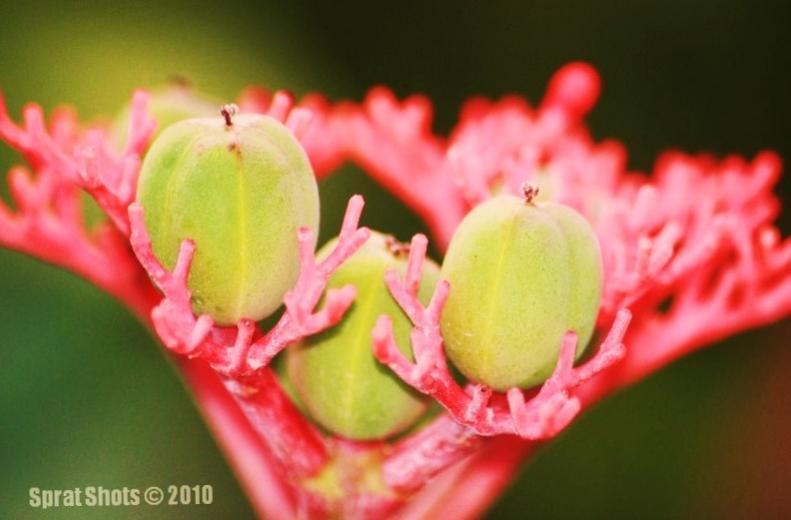 Name:  FlowerPodsA.jpg Views: 164 Size:  39.2 KB