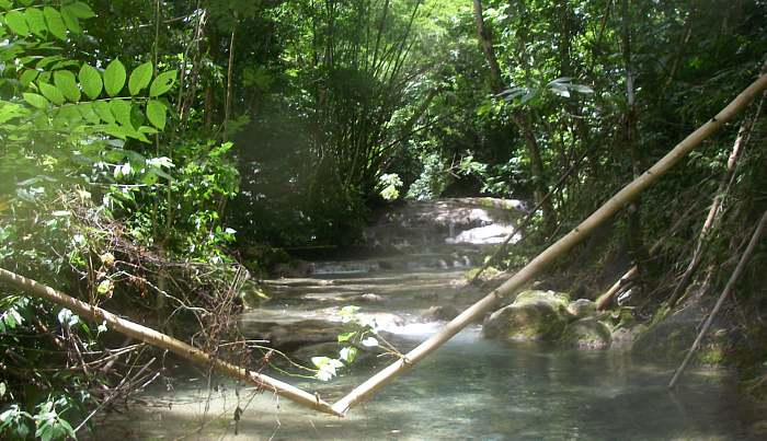 Mayfield Falls in Negril Jamaica